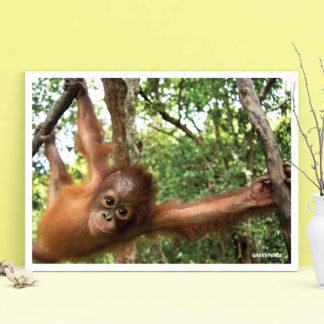 poster orango