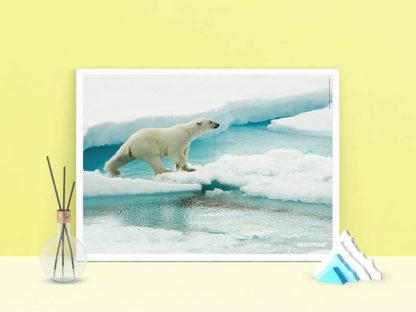 poster orso polare