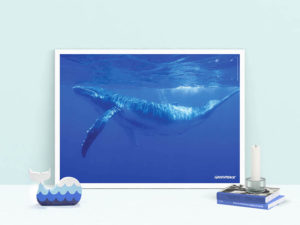 poster megattera balena