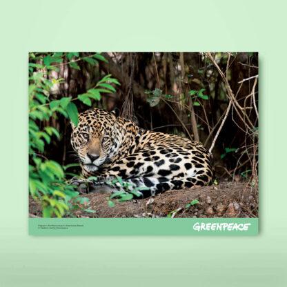 calendario giaguaro