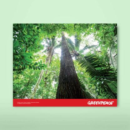 calendario solidale foreste