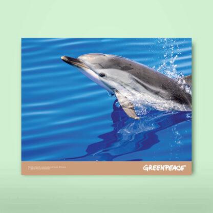 calendario carta riciclata delfino