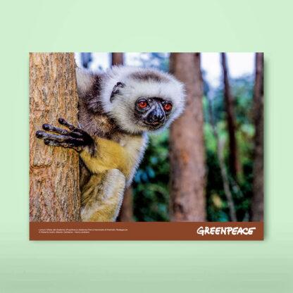regalo di natale 2020 lemure